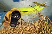 Insektensterben? Na und!