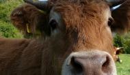 Klimaschutz:  Höhere Steuern auf Milch undFleisch