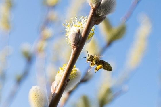 Bienenfutter - flickr.com - Foto von Rainer Stropek